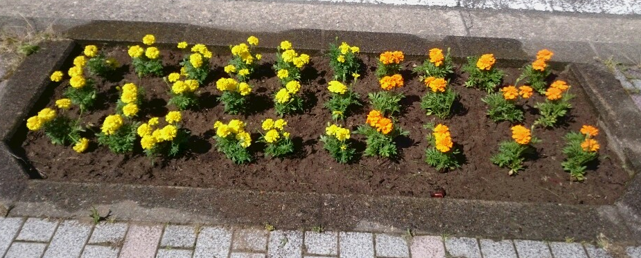 花壇1.png
